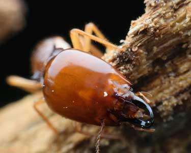 How to identify termites in Stuart, FL